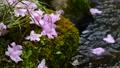 초여름의 물가 풍경 65832955