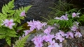 초여름의 물가 풍경 65832960
