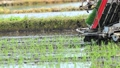 Rice transplanter Agriculture rice planting 65855360