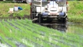 Rice transplanter, rice planting, agriculture 65855400