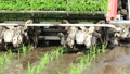 Rice transplanter, rice planting, agriculture 65855402