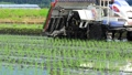 Rice transplanter, rice planting, agriculture 65855403