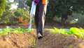 Asian farmer working in the field and giving fertilizer by digging tool into the soil for young tobacco tree 65870072