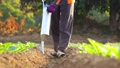 Asian farmer working in the field and giving fertilizer by digging tool into the soil for young tobacco tree 65870085