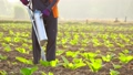 Asian farmer working in the field and giving fertilizer by digging tool into the soil for young tobacco tree 65870087