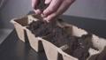 planting seeds in pots cucumbers, zucchini, pumpkins 65882299