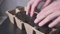 planting seeds in pots cucumbers, zucchini, pumpkins 65882300