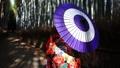 嵐山の竹林 和傘の着物女性 66116043