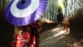 嵐山の竹林 和傘の着物女性 66116044