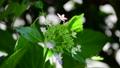 光と風、揺れるダンスパーティー、咲き始めました、新緑、花イメージ素材 66120361