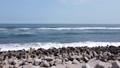 海岸【ドローン】004 66220832