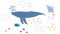 海の生き物の動画 トランジションアニメーション 66253471