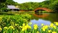 金沢八景の称名寺の庭園 66338261