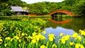 金沢八景の称名寺の庭園 66338262