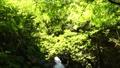 秋川渓谷の初夏 66347789