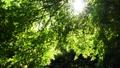 秋川渓谷の初夏 66347794