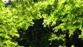 秋川渓谷の初夏 66347797