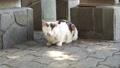 小さな声で鳴き続ける野良猫 66394547