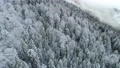 Winter nature mountains landscape. Flying over evergreen forest. Spruces covered with snow and frost. Fog between mountains. Aerial shot, 4K 66546900