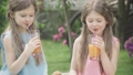 Smiling brunette twin sisters clinking glasses and looking at camera as drinking orange juice outdoors. Portrait of charming Caucasian children resting with healthy drink on summer picnic. Leisure. 66774489