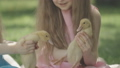 Close-up of little ducks in little girls' hands. Unrecognizable little Caucasian twin sisters playing outdoors with birds. Childhood, fun, leisure, lifestyle. Cinema FullHD ProRes HQ. 66775174