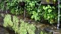 名水、湧水、水汲み場 66809509