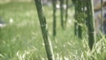 Green Bamboo trees forest background 66836009