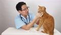 猫の診察をする獣医師 66841973