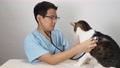 猫の診察をする獣医師 66842076