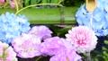 화려한 꽃이 감도는 꽃 세숫물 66910534