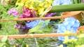 화려한 꽃이 감도는 꽃 세숫물 66910536