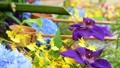 화려한 꽃이 감도는 꽃 세숫물 66910537