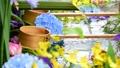 화려한 꽃이 감도는 꽃 세숫물 66910538