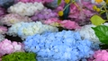 화려한 꽃이 감도는 꽃 세숫물 66910540