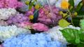 화려한 꽃이 감도는 꽃 세숫물 66910542