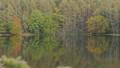 秋の御射鹿池に映り込む森(ズームイン) 66914848