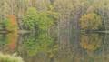 秋の御射鹿池に映り込む森と水面を泳ぐ鴨(フィックス) 66914852
