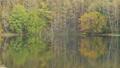 秋の御射鹿池に映り込む森(パンニング) 66914857