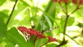 Tropical exotic butterfly in jungle rainforest sitting on green leaves, macro close up. Spring paradise, lush foliage natural background, defocused greenery in the woods. Fresh sunny romantic garden 67002151