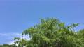 tree, wood, sky 67120206