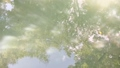 Water surface that reflects light and trees reflected there 67208818