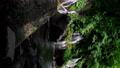 山梨県北杜市の名勝「吐竜の滝」(縦・フィックス) 67274052