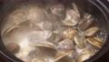 蛤类贝类火锅慢动作 67707506