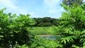 秋田縣夏季河道青空景觀 67808590