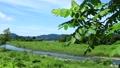 秋田縣夏季河道青空景觀 67808593