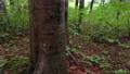 비를 수집 참나무 67899551
