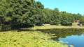 City pond covered with water lilies at summer day 67981450