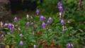 Flowers blooming beside the mountain trails of Mt. Tanigawa 68048877