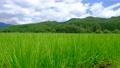 夏の田園風景 68067677