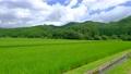 夏の田園風景 68067678